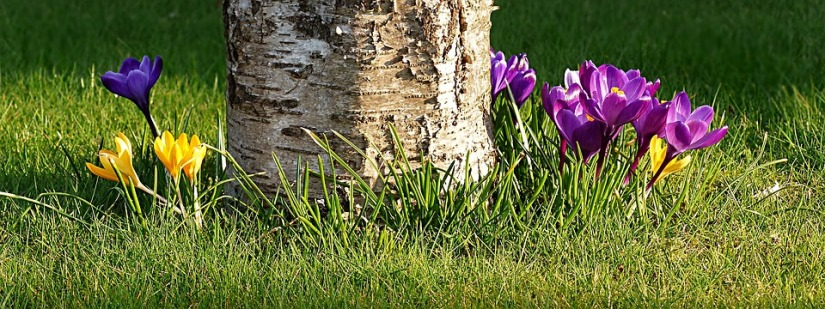 flower-2157883_960_720